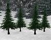 ~CB Pine Trees