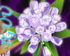 [TGUU Lilac Glow  Roses