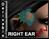 (MV) Der Right Ear Rose