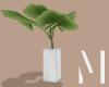 Apartment Tropical Plant