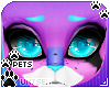 [Pets] Ari | eyebrows
