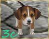 [3c] Puppy Pet