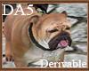 (A) Bull Dog Leash