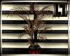 !LL! LaNera Plant