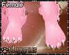 *LY*Cupcake Paws