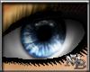 M B Pacific Blue.Eyes
