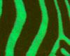 [DH]Green Zebra Nails