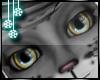 [S] Snow Leopard Eyes