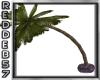 Purple Club Palm