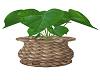 WICKER POT PLANT