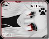 [Pets] Gol | hair v2