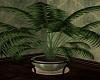 Pleasant / Plant 2
