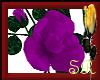 SR~PurpleRoseBush