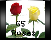 V~ 65 Roses