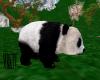 ride a Panda