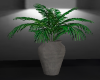 palm tree potted