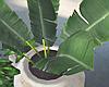 Big Pot House Plants