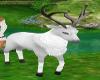 Ma's pet white deer
