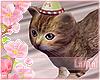 Party Cat ~