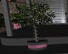 NF star tree