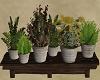 Somewhere / Plants