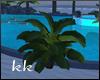[kk] Tropical Plant