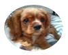 Puppy pic sticker