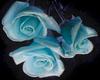 Blue Roses -1LT