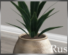 Rus Burke Plant