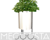 Aesthetic White Plant