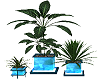 furn plants