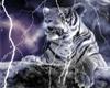 Lightning Tiger
