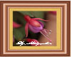 Framed Picture Fuchsia