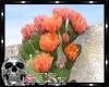 CS Rae's Cactus Pic 2