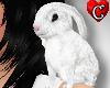 CC Bunny white