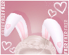 F. Bunny Ears P