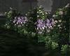 Rose Iris Garden