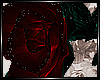 + Red Rose +