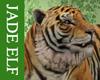 [JE] Tiger Pet 2