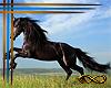 [CFD]Wild Horse Saloon