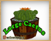 Large Cactus in Barrel