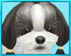 Shih Tzu Dog Pet