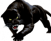 Beautiful Black Panther2