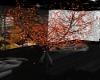 [ B ] Tree - Autumn