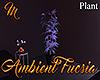 [M] Ambient Fucsia Plant
