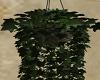 Somewhere / Plant 2