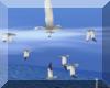 "GIL""Seagulls"