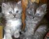 (RE)CUTE CATS STICKER