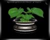 RockyMountain Plant