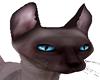Shamu Cat